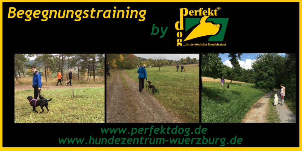 Begegnungstraining perfekt dog