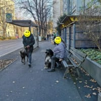 Hundeführerschein Würzburg