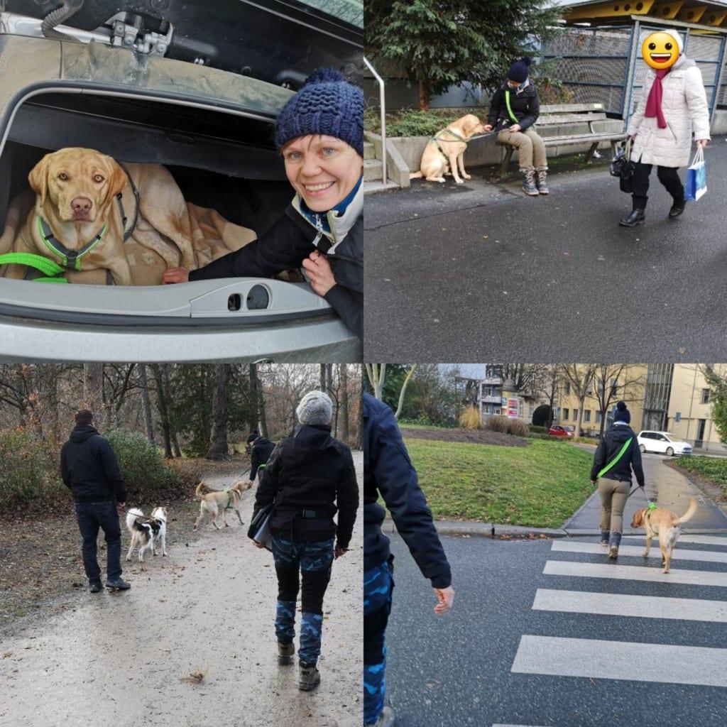Hundeführerschein perfekt dog